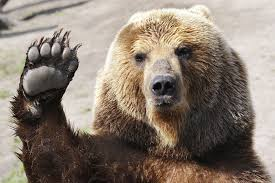 High Five Bear